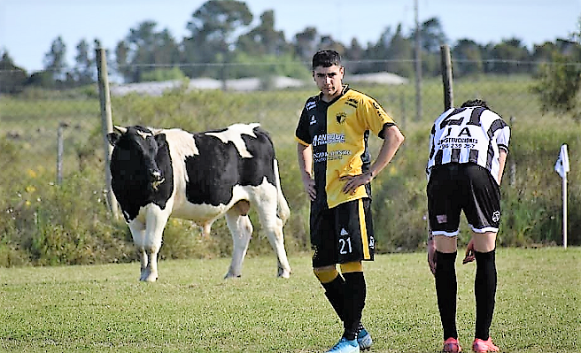 Uruguay: partido de fútbol se suspende por el ingreso de una vaca